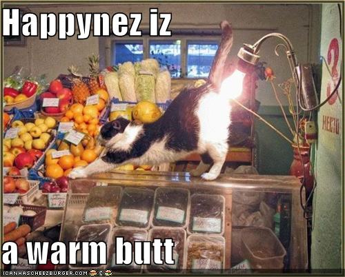 funny-pictures-cat-groceries-lightbulb-butt1.jpg